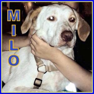 MILO (2)