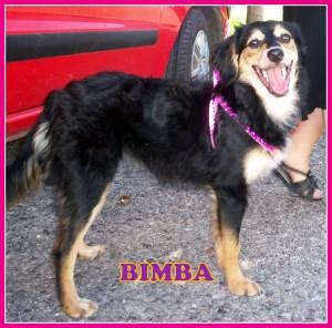 bimba2